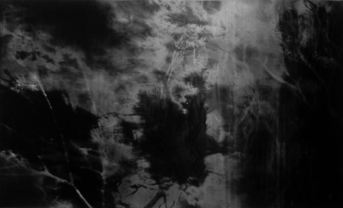 Jared Handelsman, Moonlight: Photo-based drawings captured in a moonlit forest landscape
