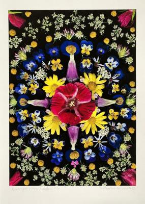 Flower Mandala, Tulip