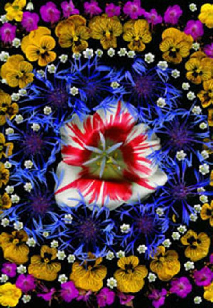 Portia Munson, Flower Mandala: Tulip